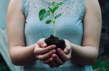 Paudalho promove plantio de 1.500 mudas de árvores nativas da Mata Atlântica na próxima segunda-feira (05)